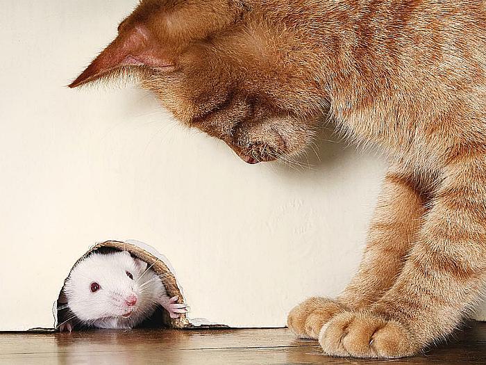 Картинки кот с мышью, поздравление