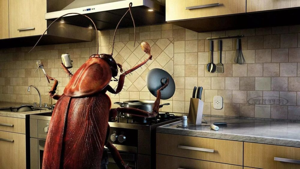 Ловушка для тараканов электрическая своими руками