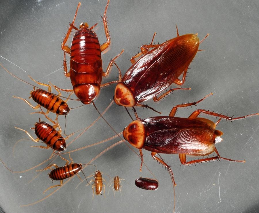 Лучшее средство от насекомых в квартире