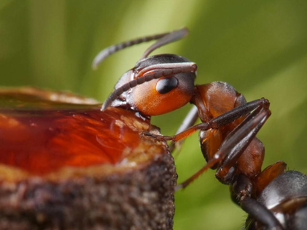 защищаемом помещении насекомое которые едят муравьев картинки этом специально