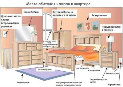 Как навсегда вывести клопов из квартиры самостоятельно в домашних условиях