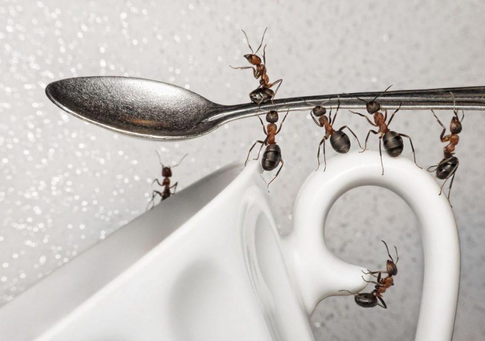 Муравьи на кухне эффективные способы избавления от насекомых