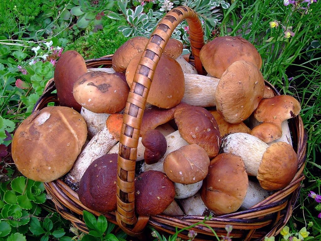 Качественные грибы
