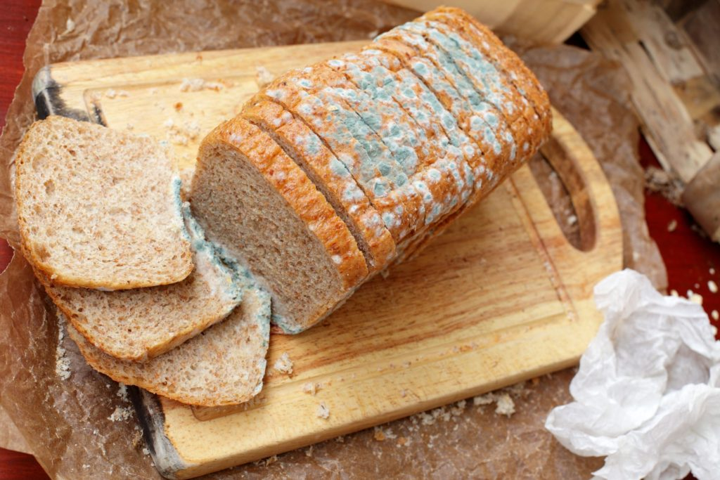 Плесень хлеба картинки