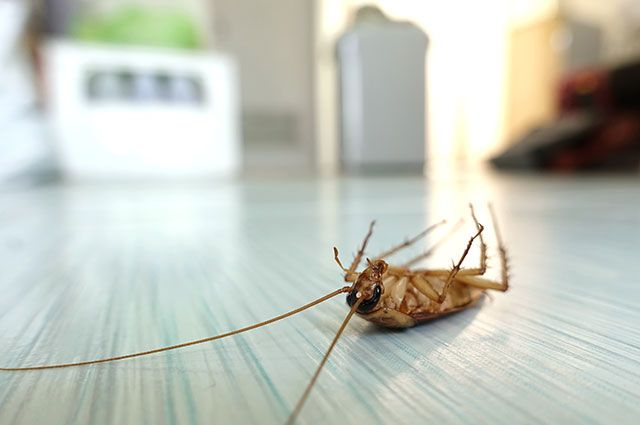 Борьба человека с тараканами